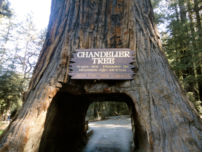 The Chandelier Tree