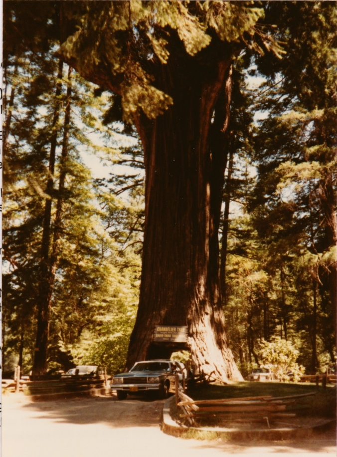 Us on a long ago summer vacation driving through the Chandelier Tree with a (once again) clean son and a fairly clean car.