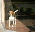 A sign of life - a puppy in the window? How much do you think that doggie is?