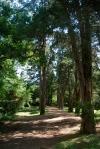 A tree-lined path.