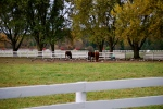 Illinois horse farms